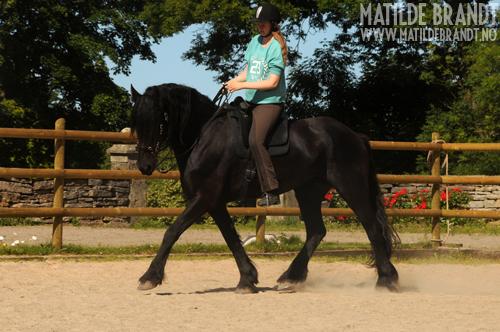 hode skala hest