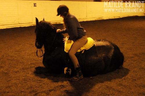 hvor lang tid er en hest gravid