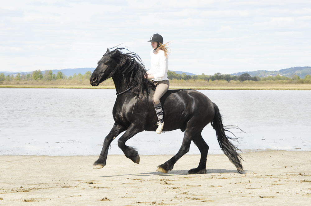 beach friesian tackless cordeo neckrope