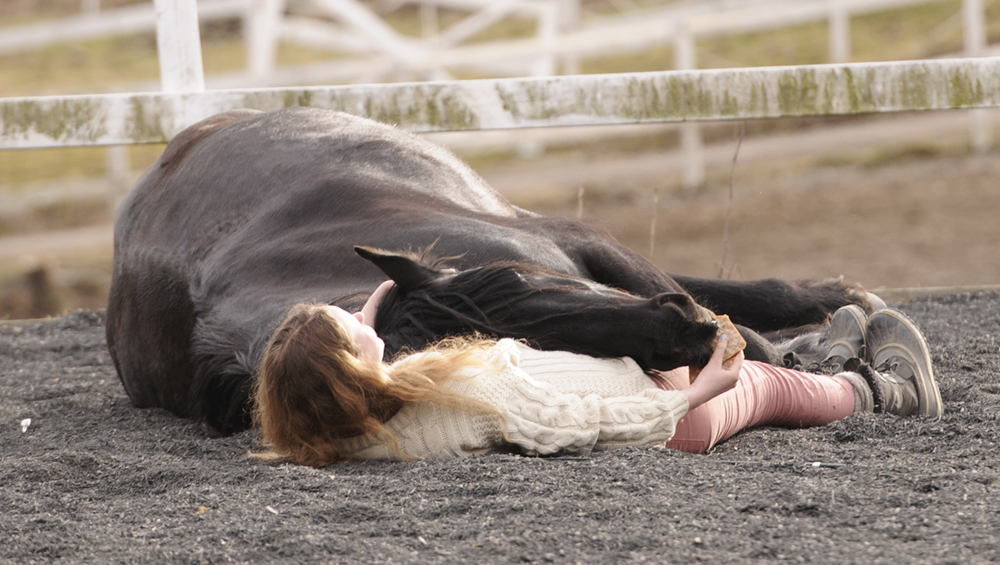 horse lie down on cue