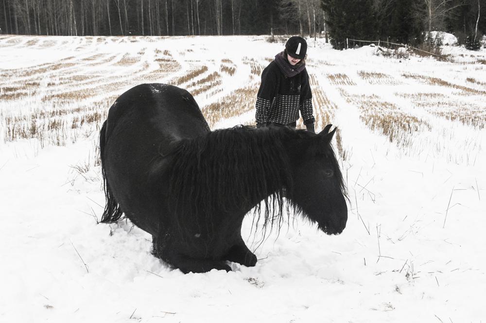 horse lie down trick