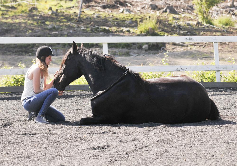 horse lie down trick3