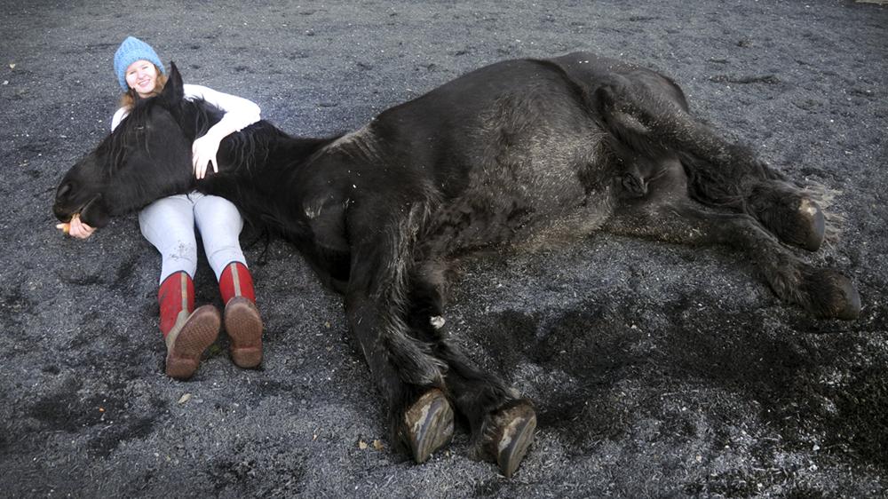 horse lying in lap