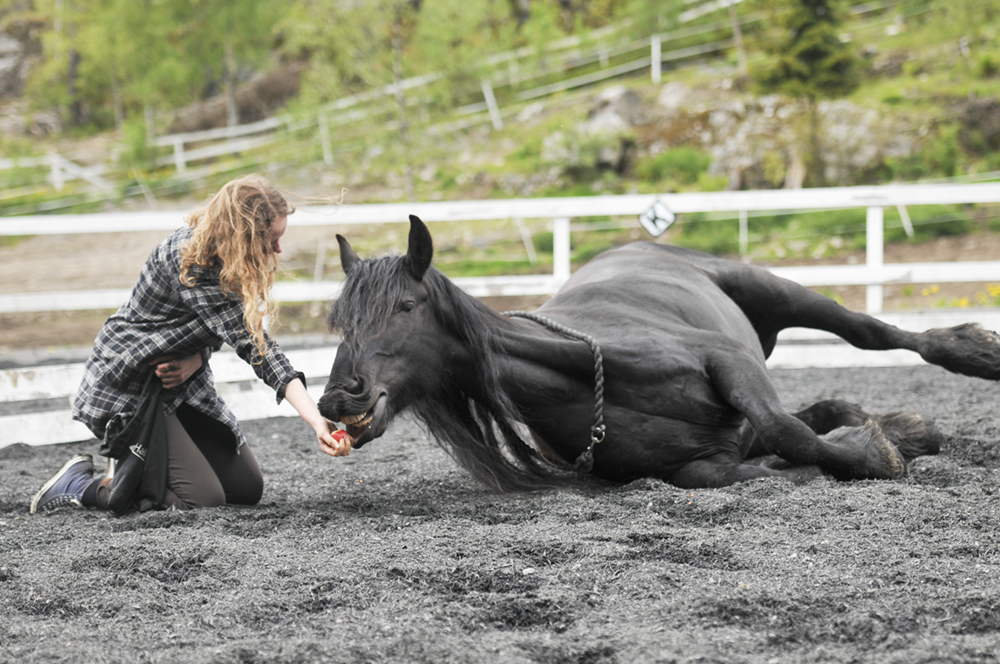 horse trick trainin