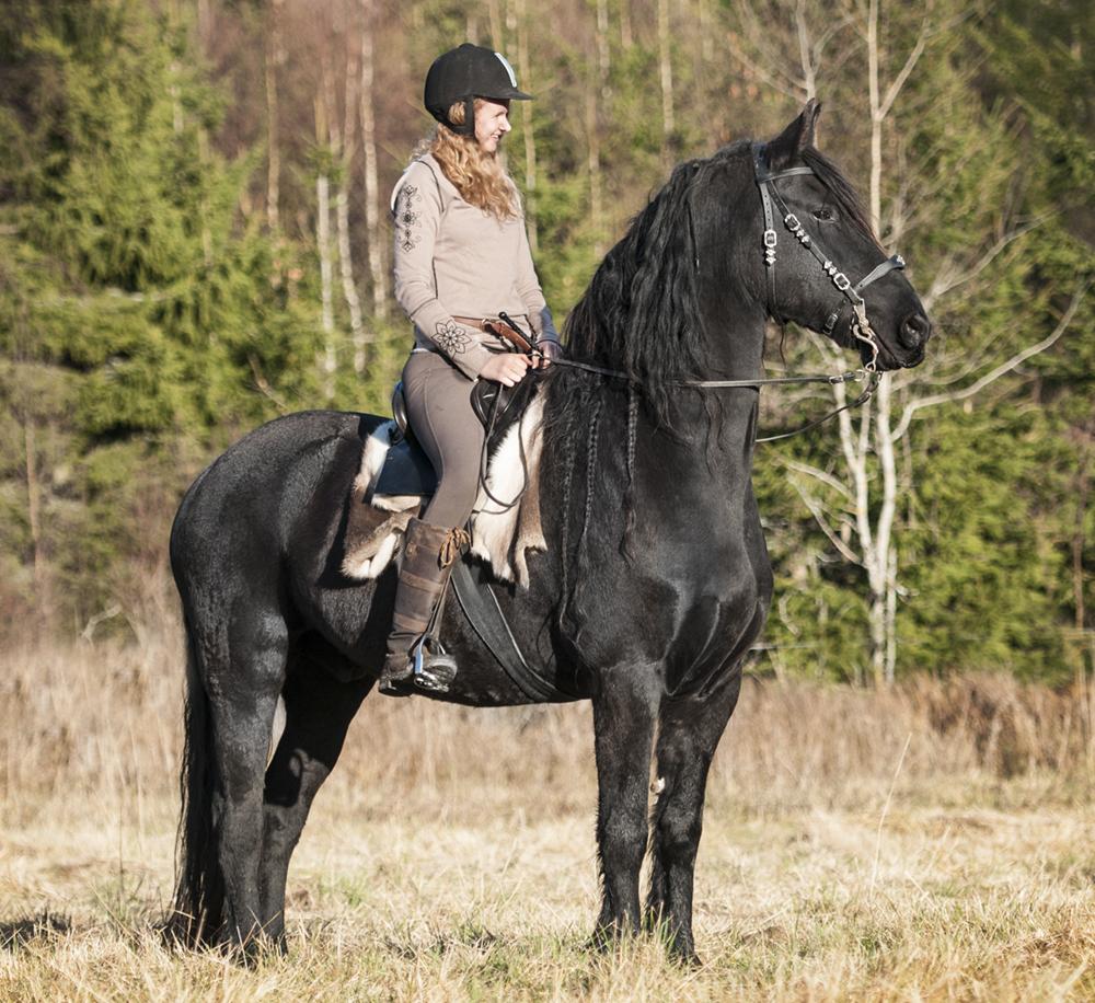 friesian hesteblogg matilde brandt1