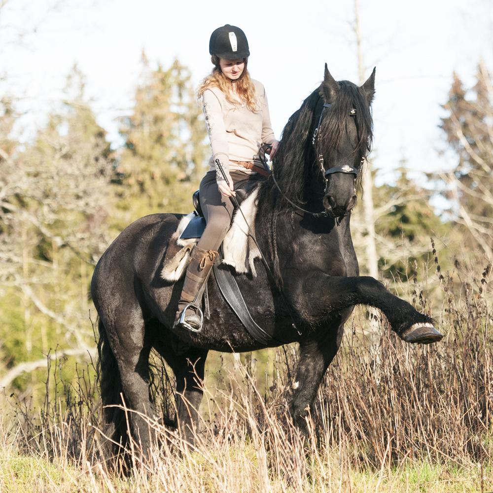 friesian hesteblogg matilde brandt12