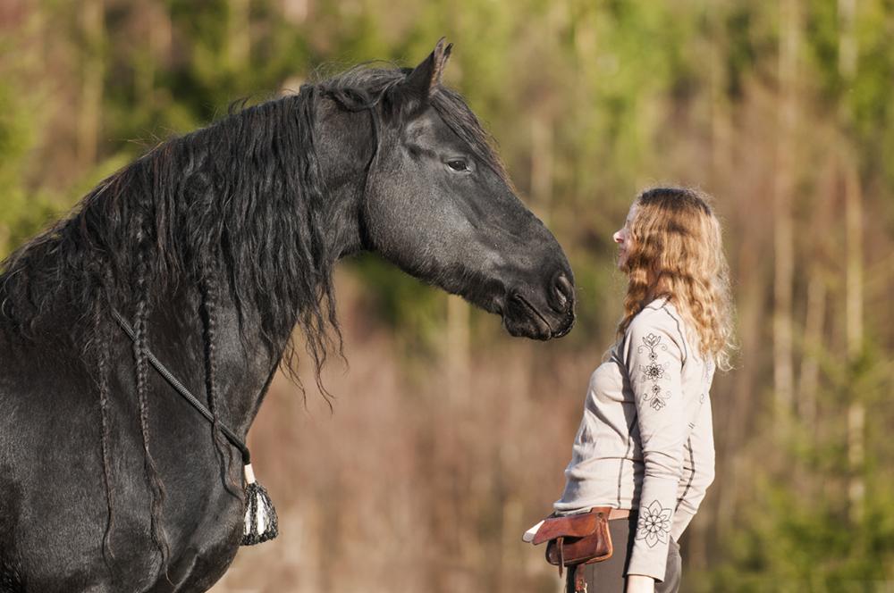 friesian hesteblogg matilde brandt13