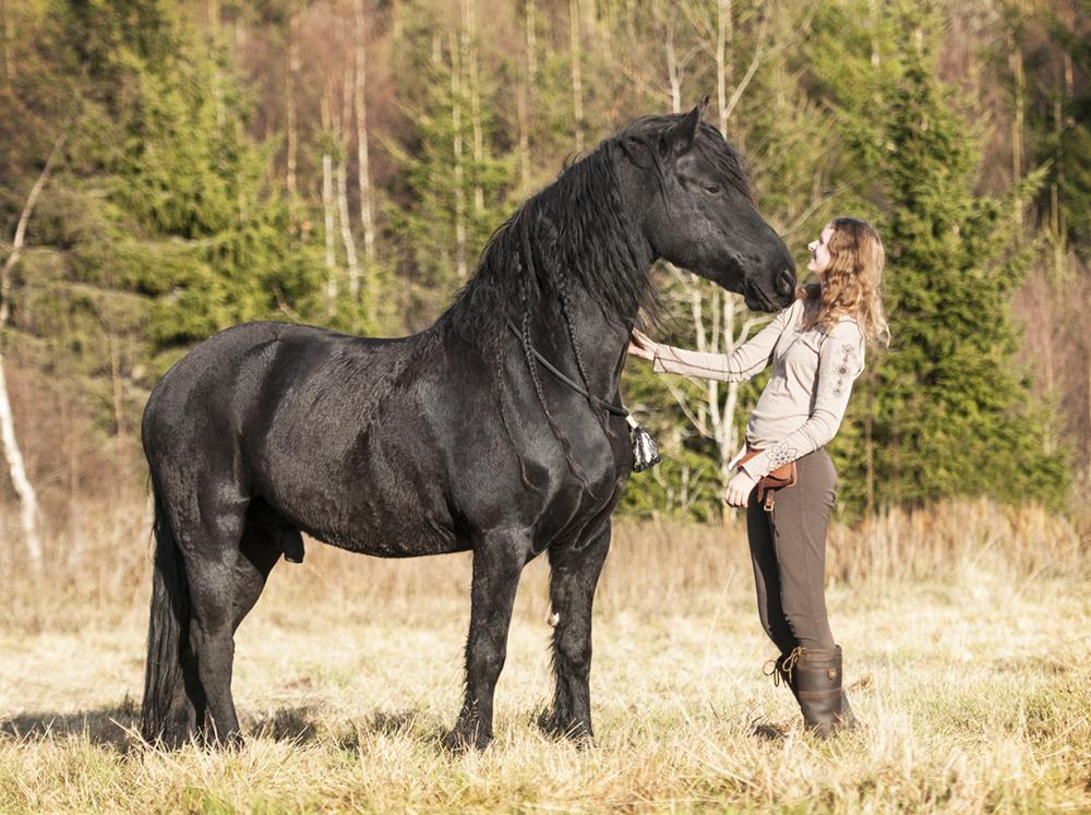 friesian hesteblogg matilde brandt14