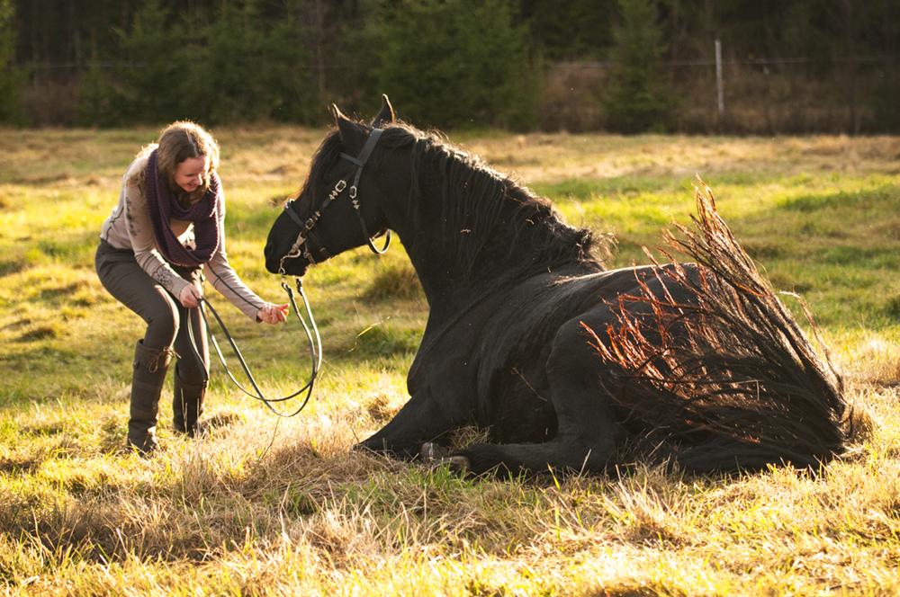 friesian hesteblogg matilde brandt16