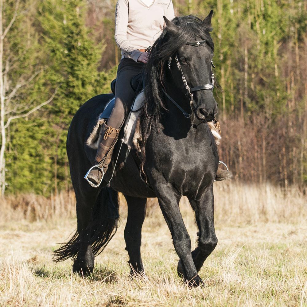 friesian hesteblogg matilde brandt2