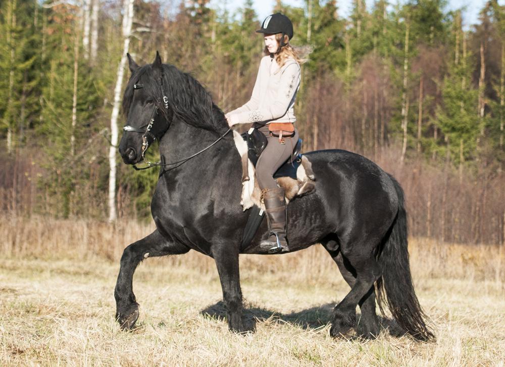 friesian hesteblogg matilde brandt4