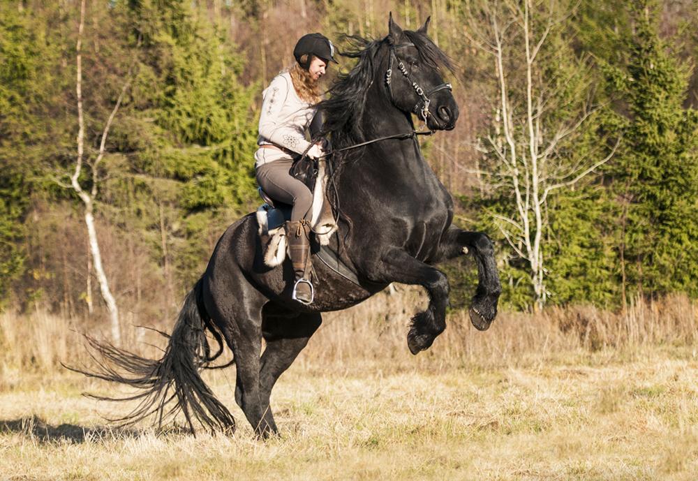 friesian hesteblogg matilde brandt5