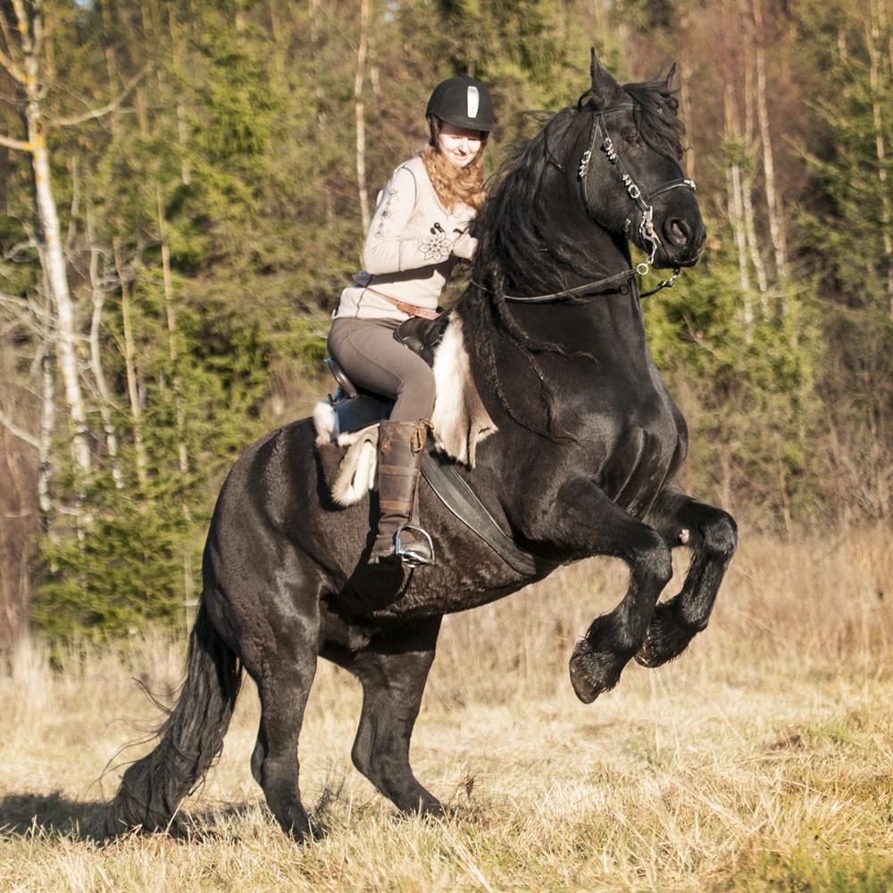 friesian hesteblogg matilde brandt7