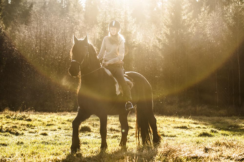friesian hesteblogg matilde brandt9