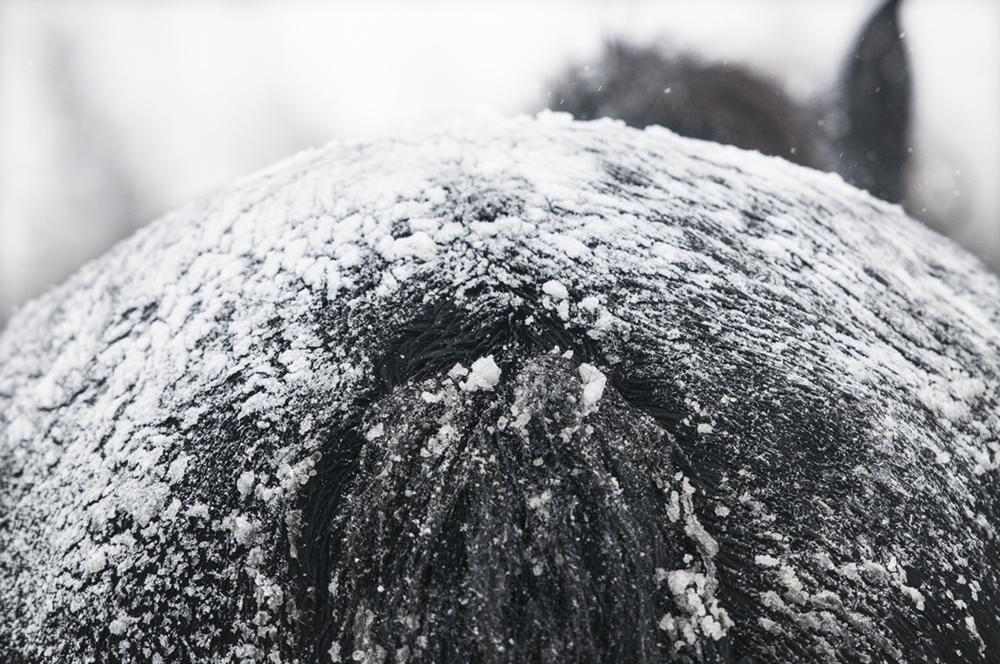 friesian matilde brandt snow10
