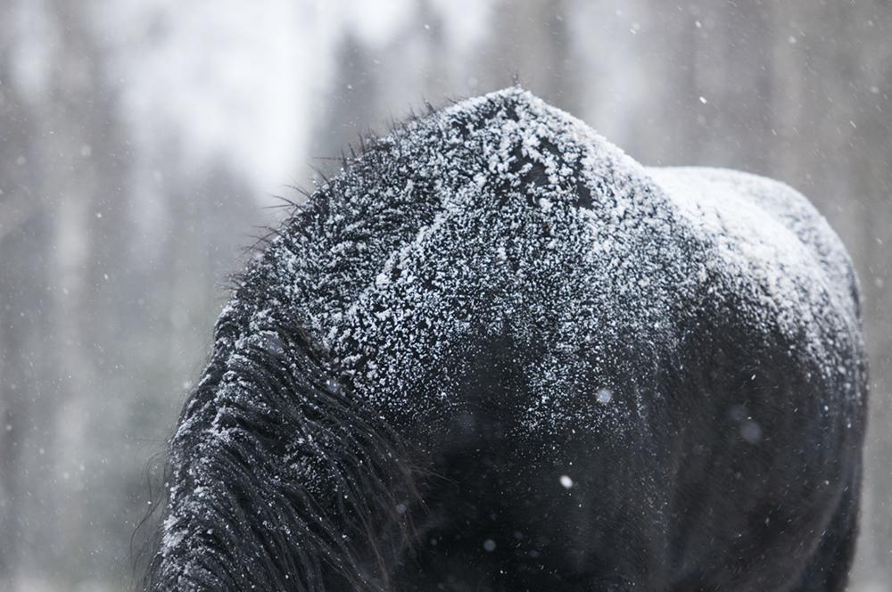 friesian matilde brandt snow15