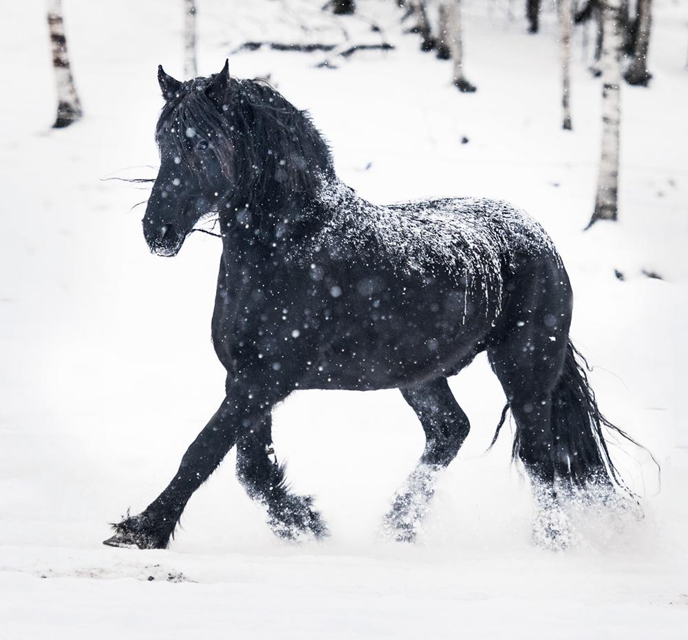 friesian matilde brandt snow17