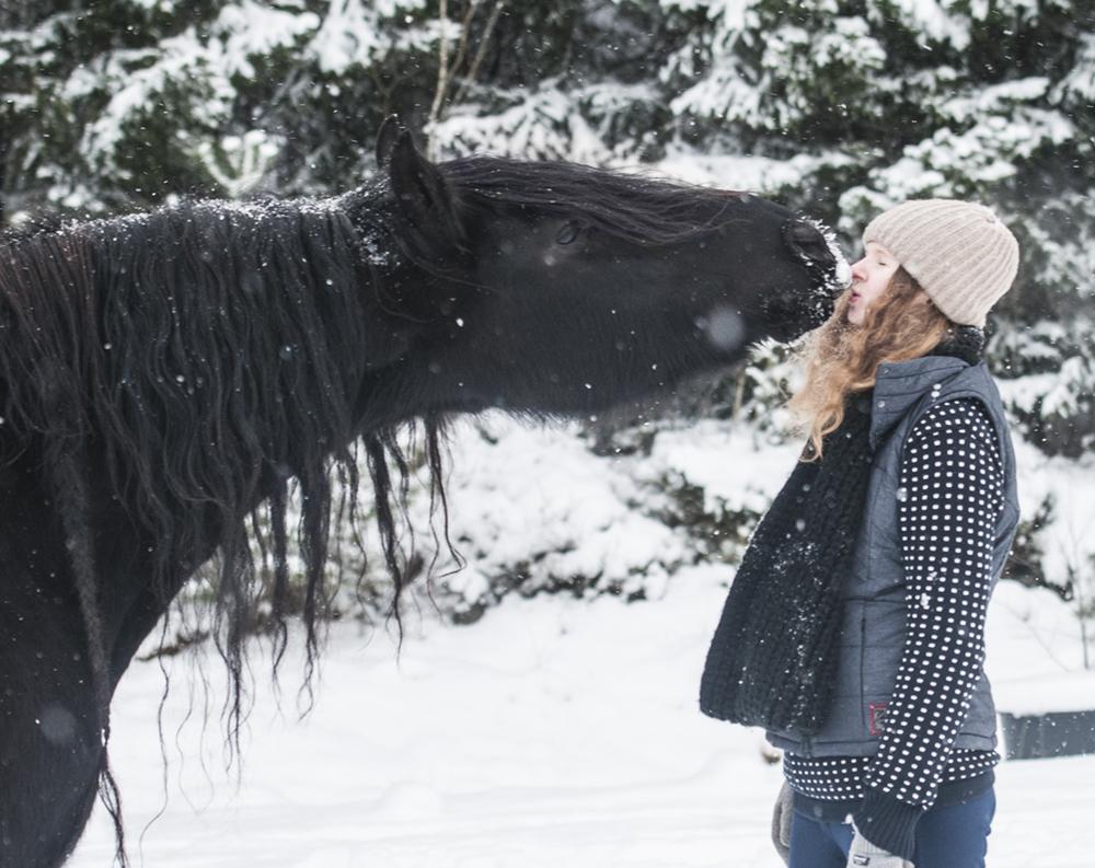 kiss horse trick training4