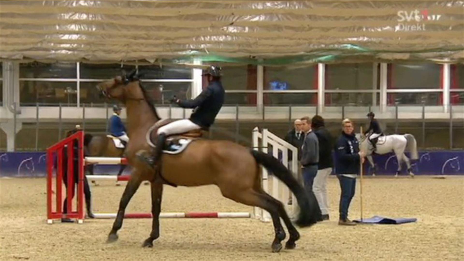 gothenburg_horse_show2