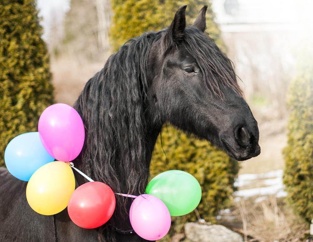 horse birthday8