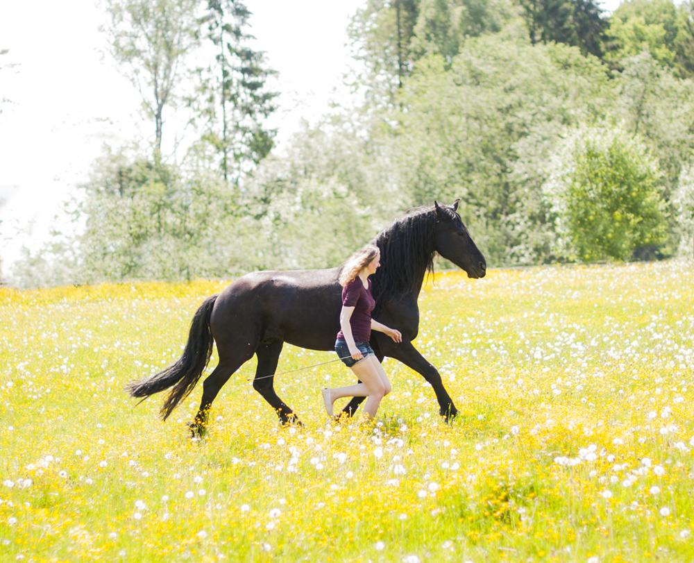 liberty horse