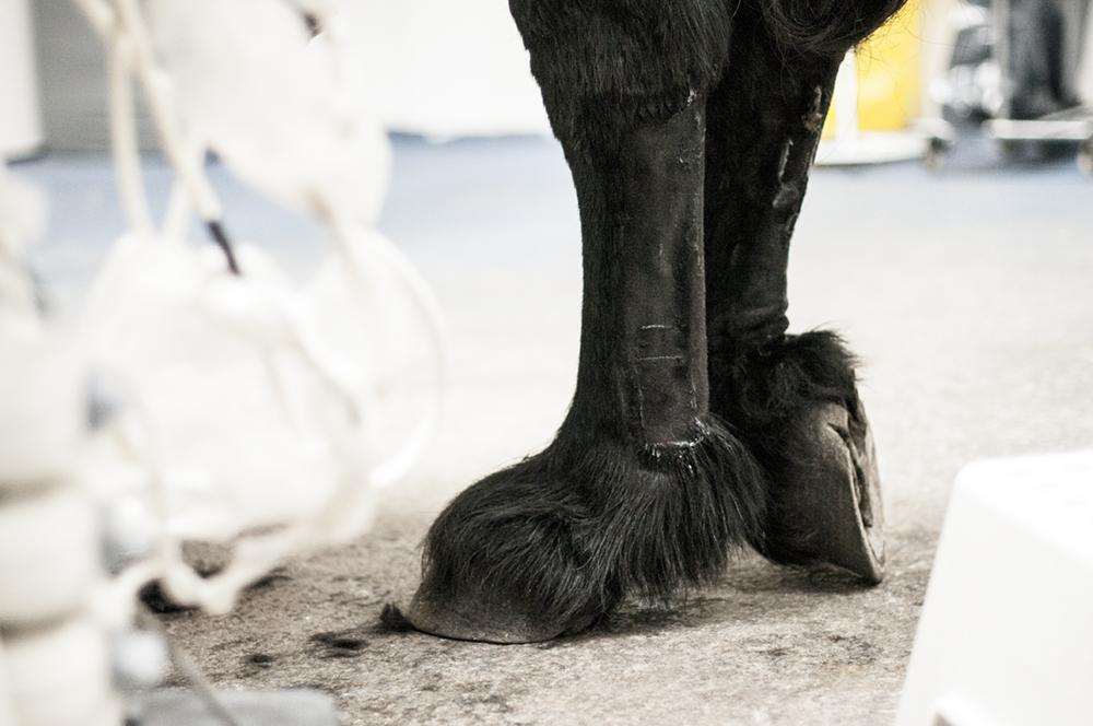 ultrasound horse