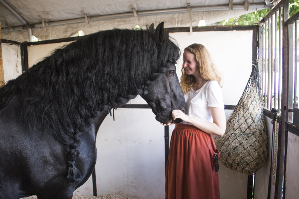 13-frederik-the-great-friesian