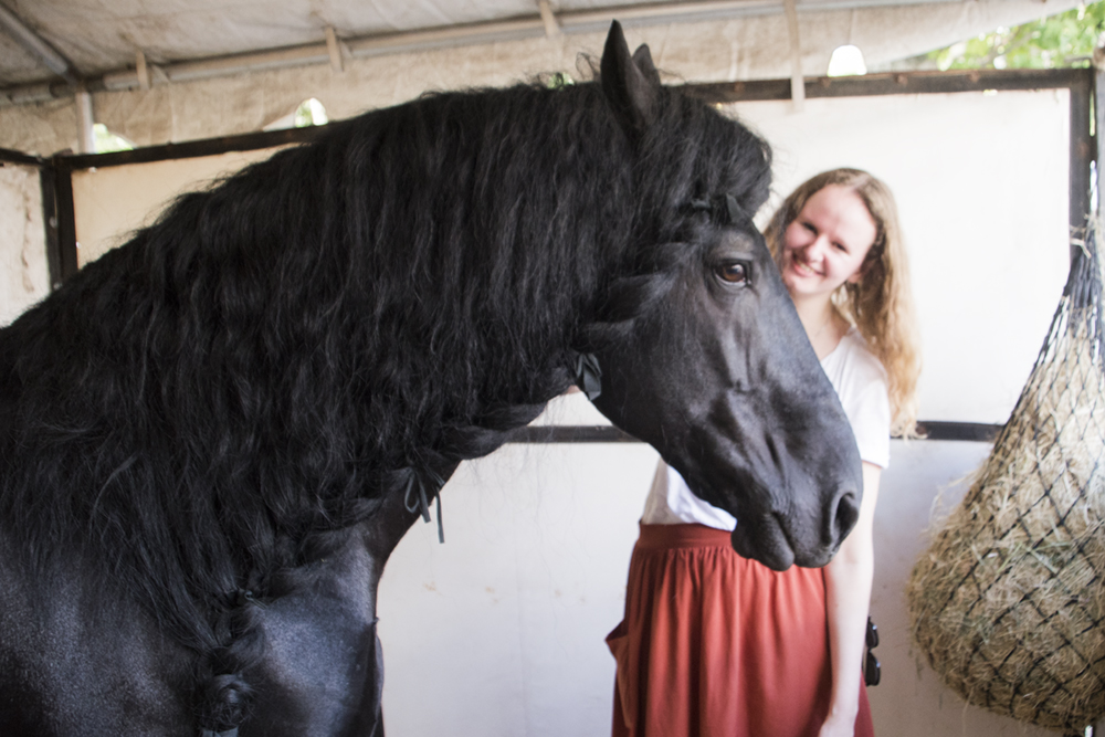 15-frederik-the-great-friesian