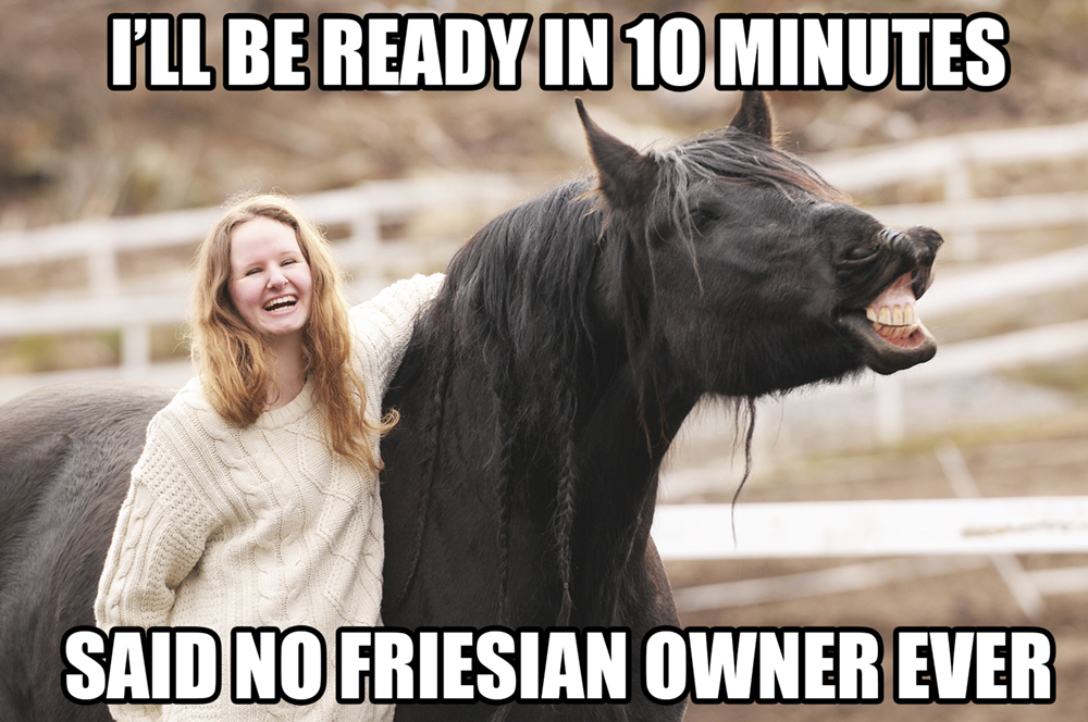 friesian-meme