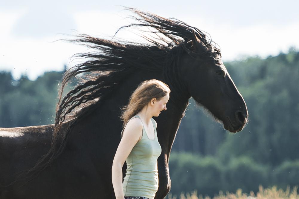 horse-liberty