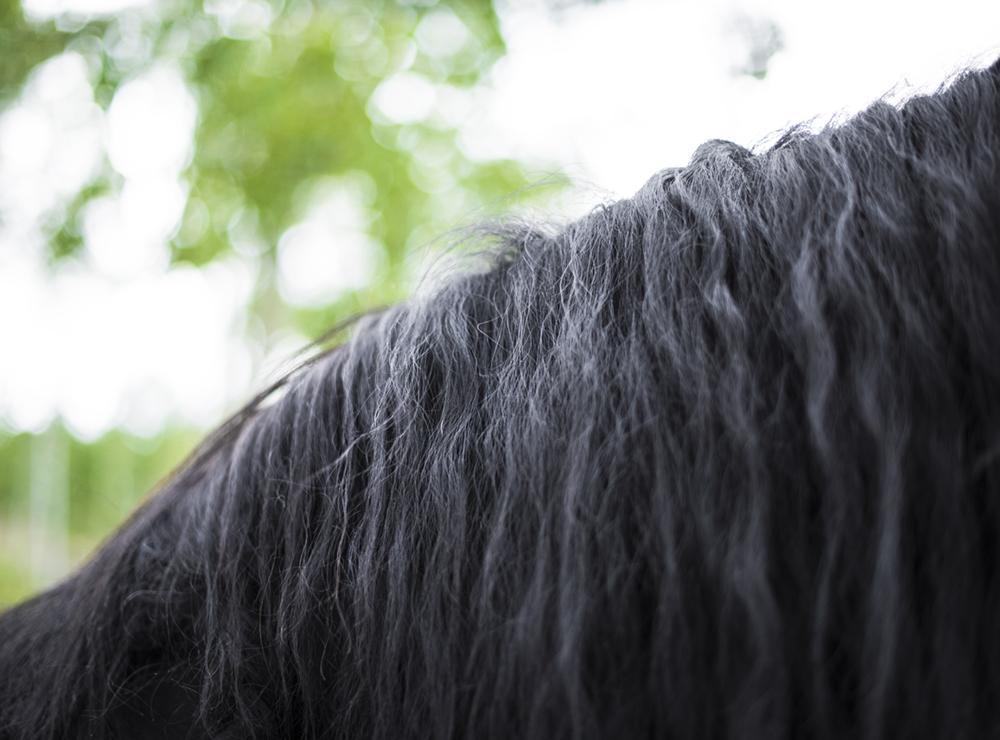 horse-mane-grow