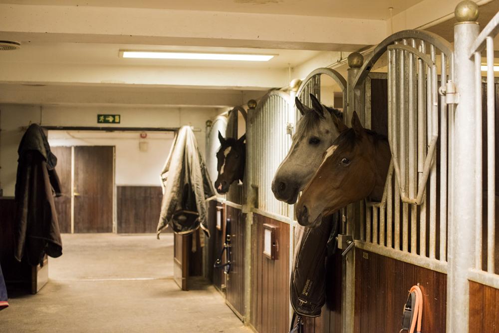 equiconsult_equestrian_entrepreneurs6