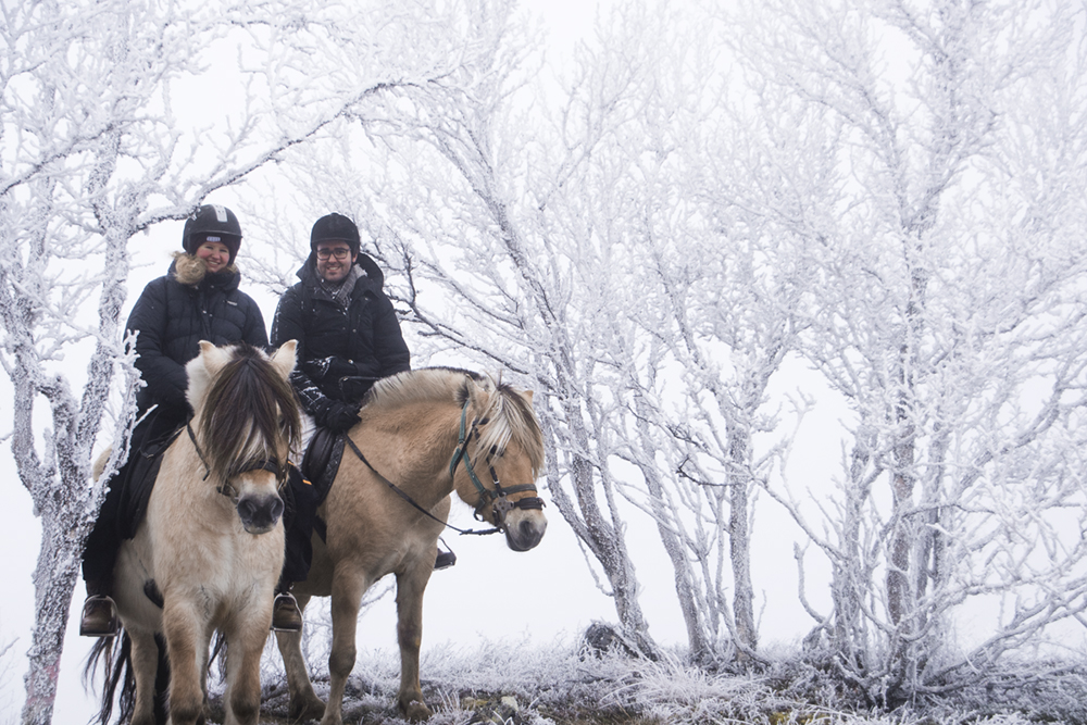 langedrag_fjordhorse_ride11