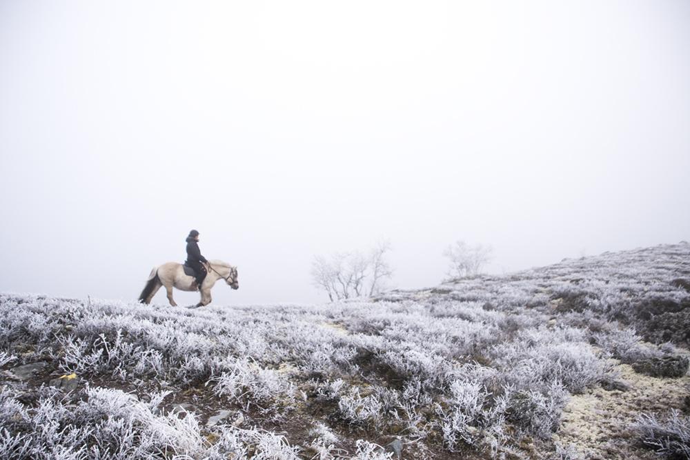 langedrag_fjordhorse_ride12