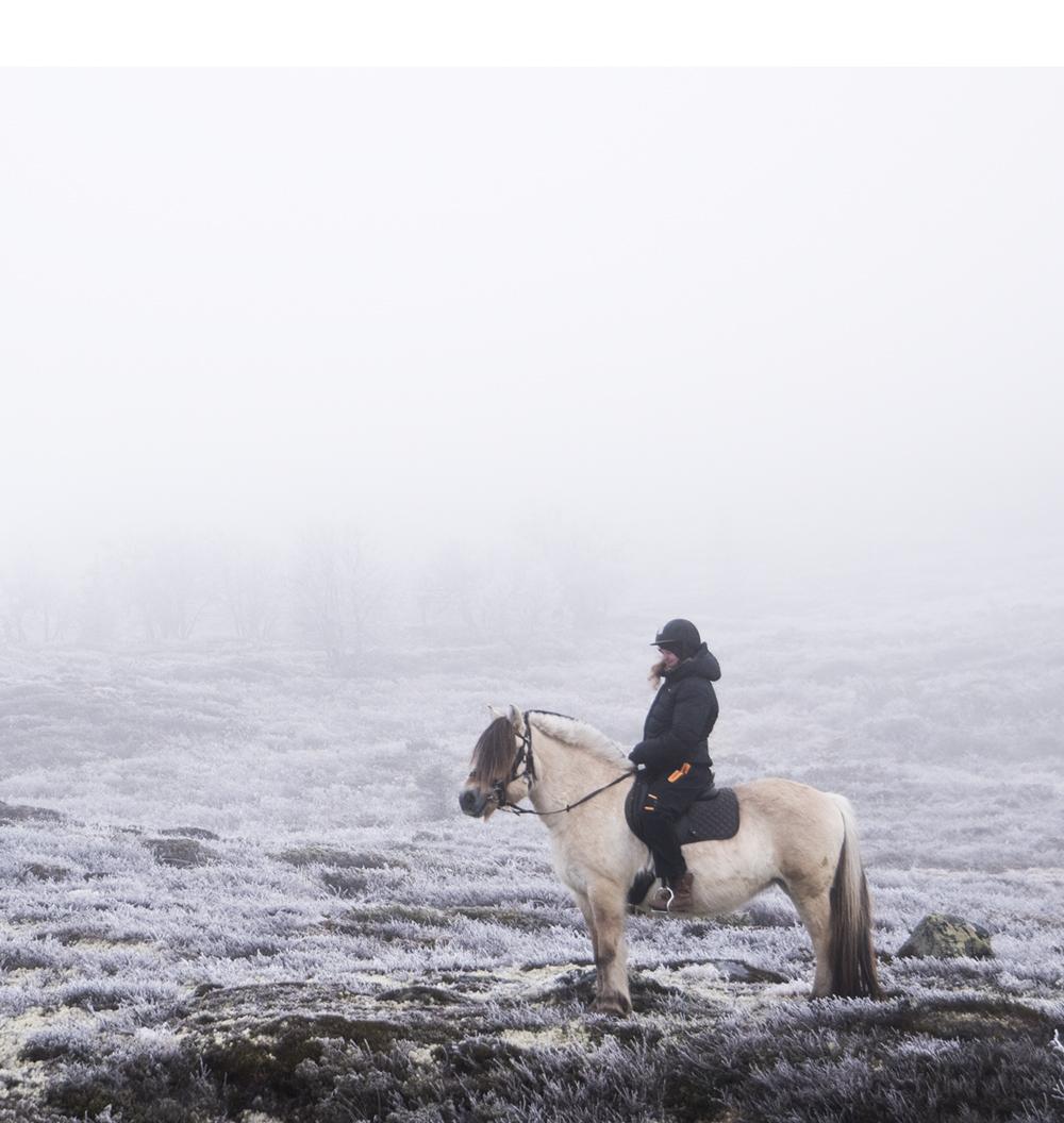langedrag_fjordhorse_ride14