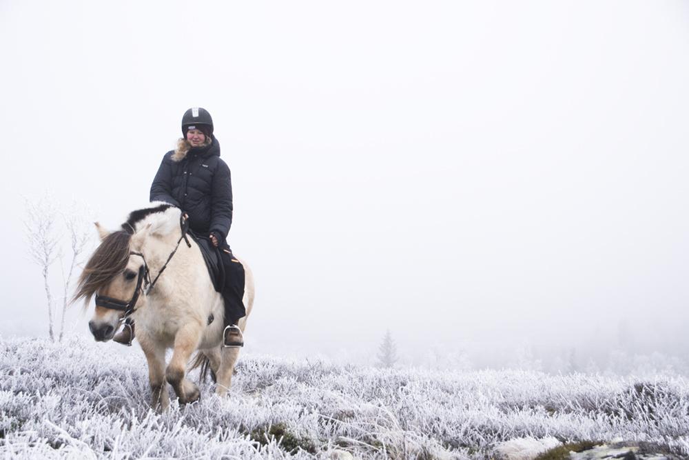 langedrag_fjordhorse_ride16