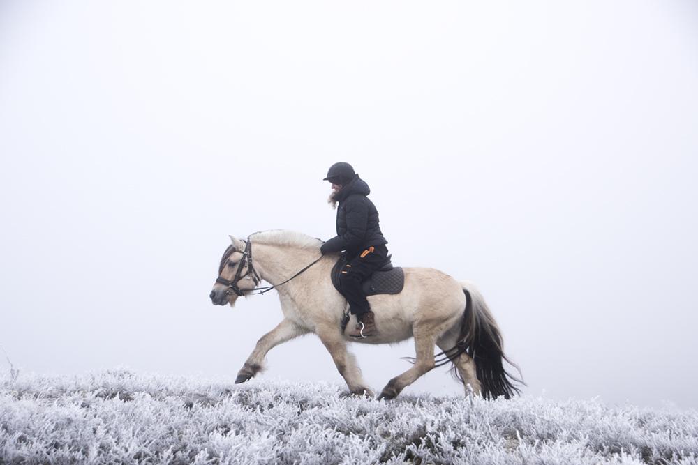 langedrag_fjordhorse_ride17