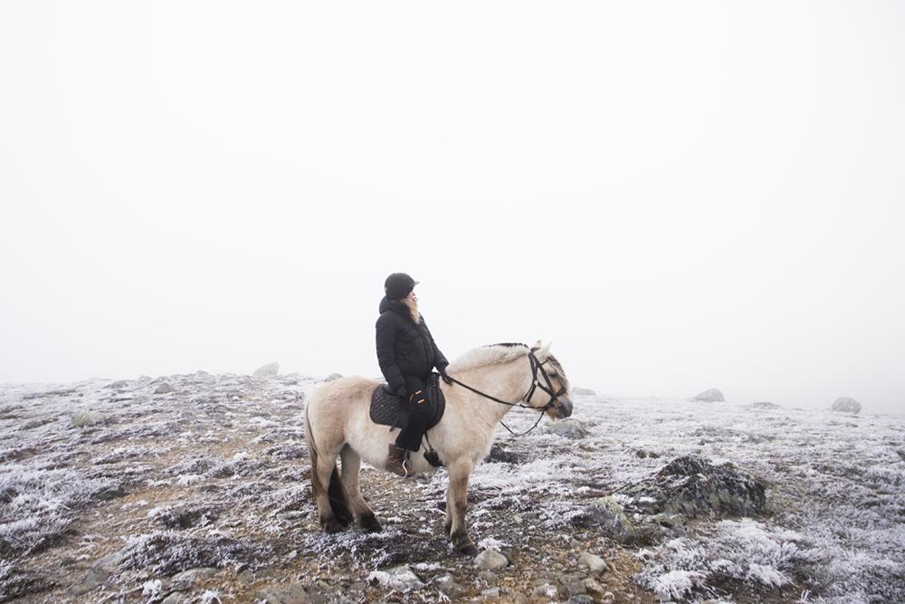 langedrag_fjordhorse_ride19