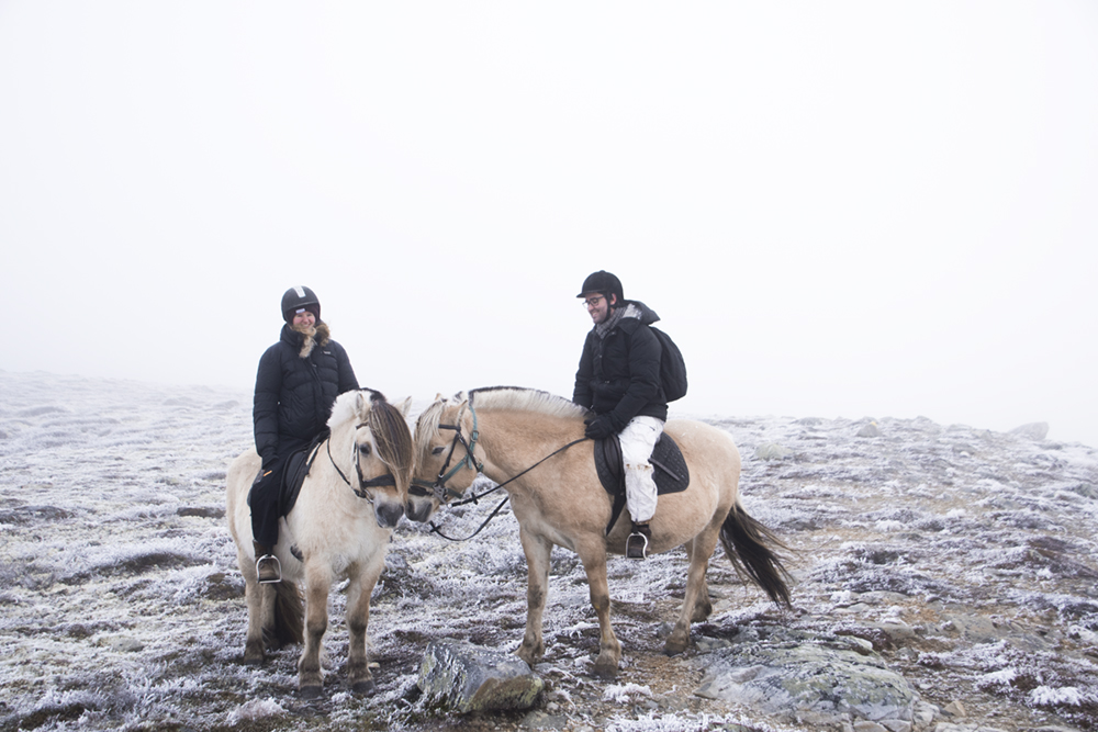 langedrag_fjordhorse_ride20