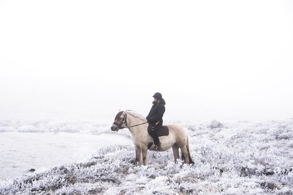 langedrag_fjordhorse_ride23
