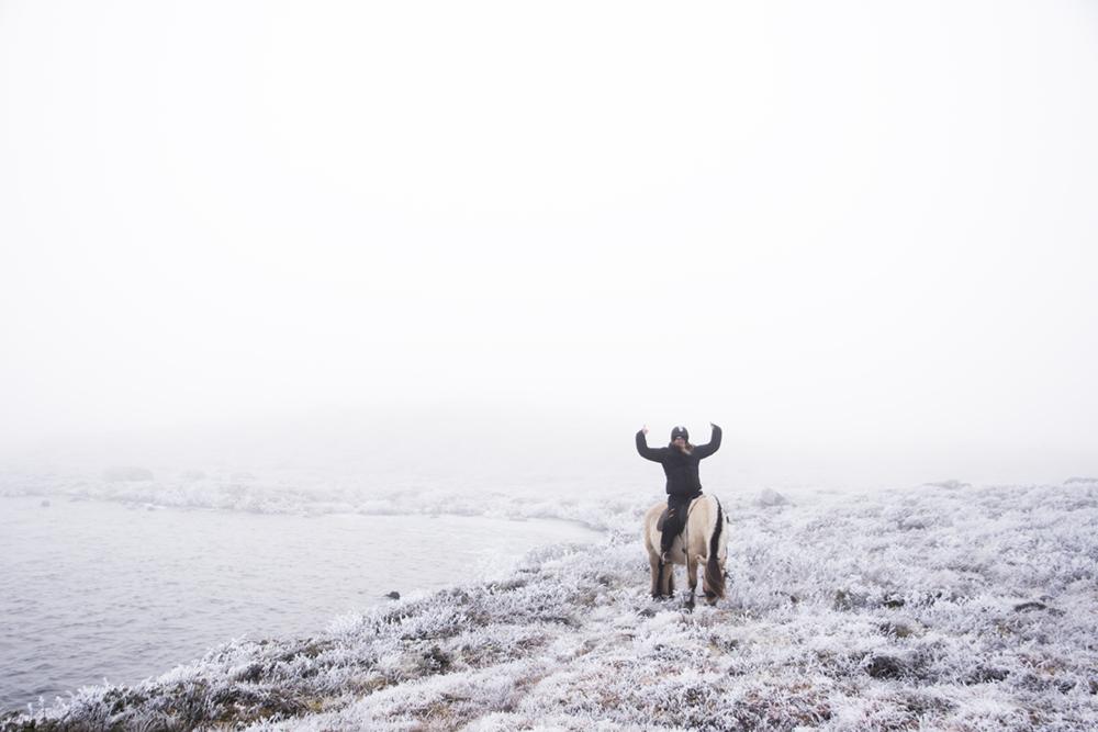 langedrag_fjordhorse_ride24