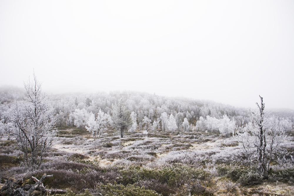 langedrag_fjordhorse_ride26