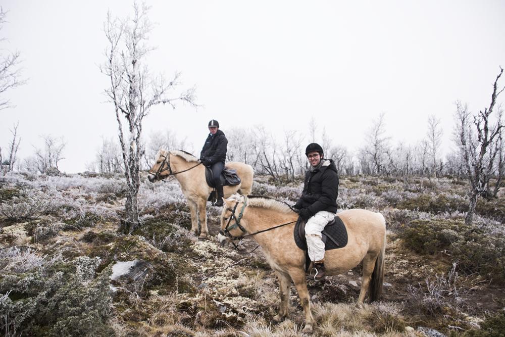langedrag_fjordhorse_ride27