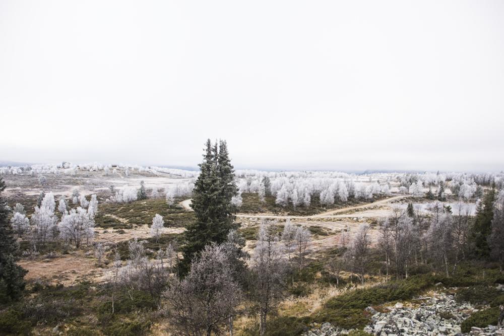 langedrag_fjordhorse_ride30