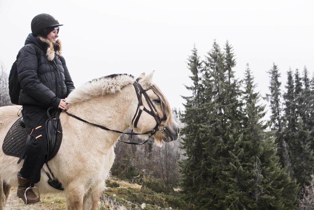 langedrag_fjordhorse_ride31