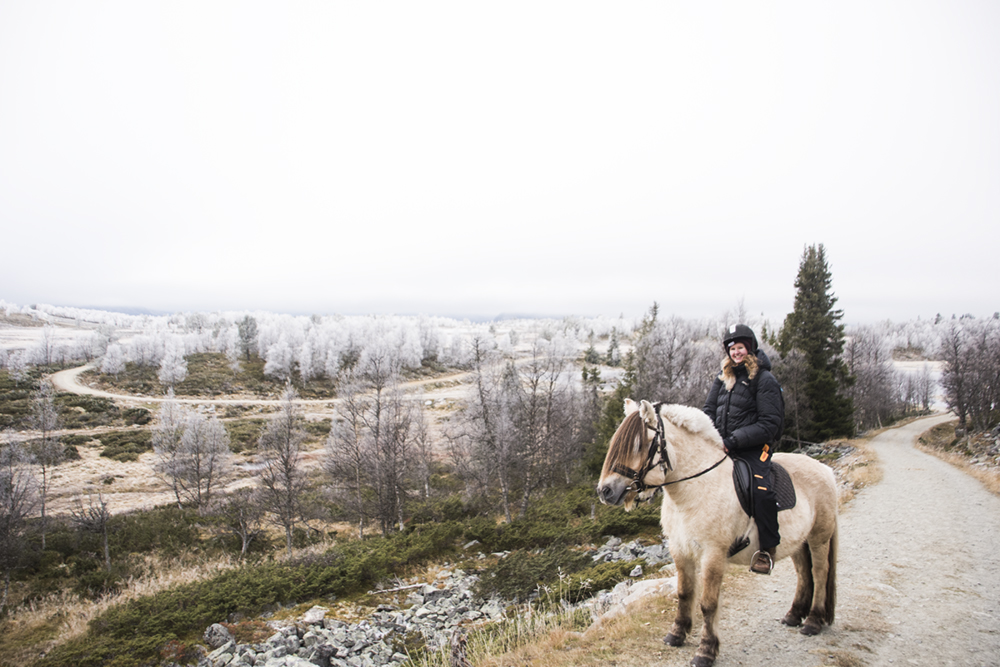 langedrag_fjordhorse_ride32