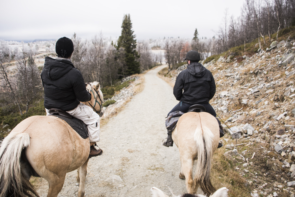 langedrag_fjordhorse_ride34