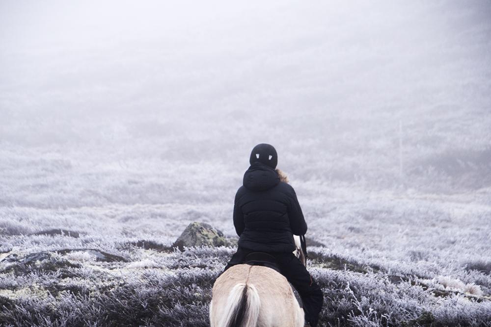 langedrag_fjordhorse_ride6
