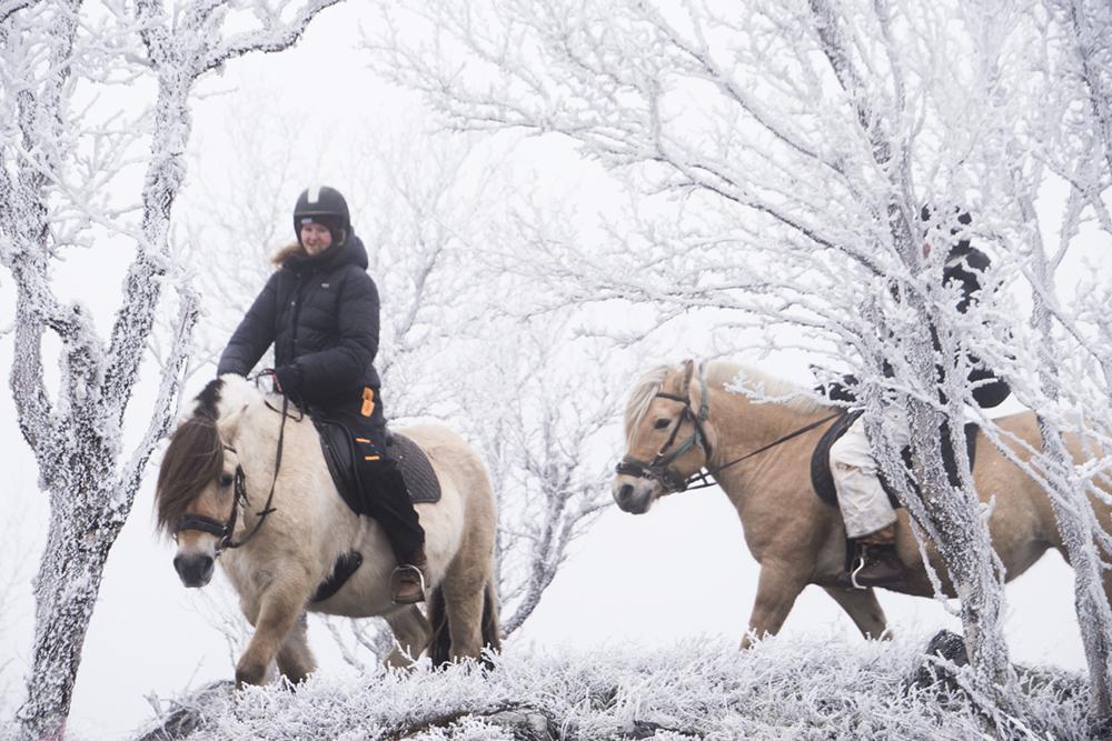 langedrag_fjordhorse_ride9