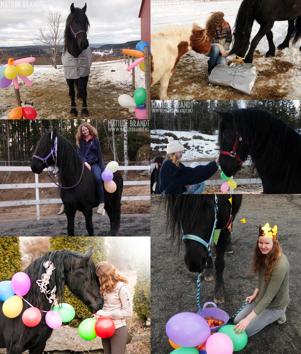 bursdag-hest
